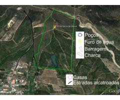 20 hectares com olival sobro eucalipto. muita água.