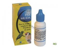 Pax muda papagaio, canario, piriquito, arara, agaporne, roseicoller, caturra, pintassilgo, mandarim