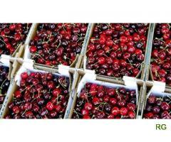 Apoios á exportação de produtos agricolas