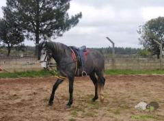 Cavalo montado com livro verde