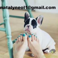 Gratis  lindo filhote de cachorro grande Bulldog Francês mais importante do que o dinheiro