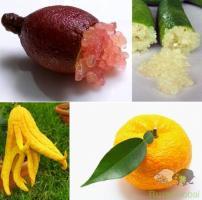 Árvores 3 Limoeiros, Limão Caviar + Yuzu + Mão de Buda -Portes Gratis!
