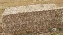 Fardos de palha retangulares grandes