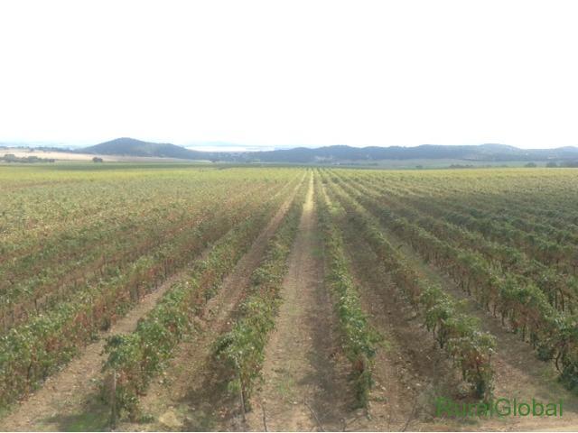Herdade de vinha com cerca de 100 há na zona de Portalegre